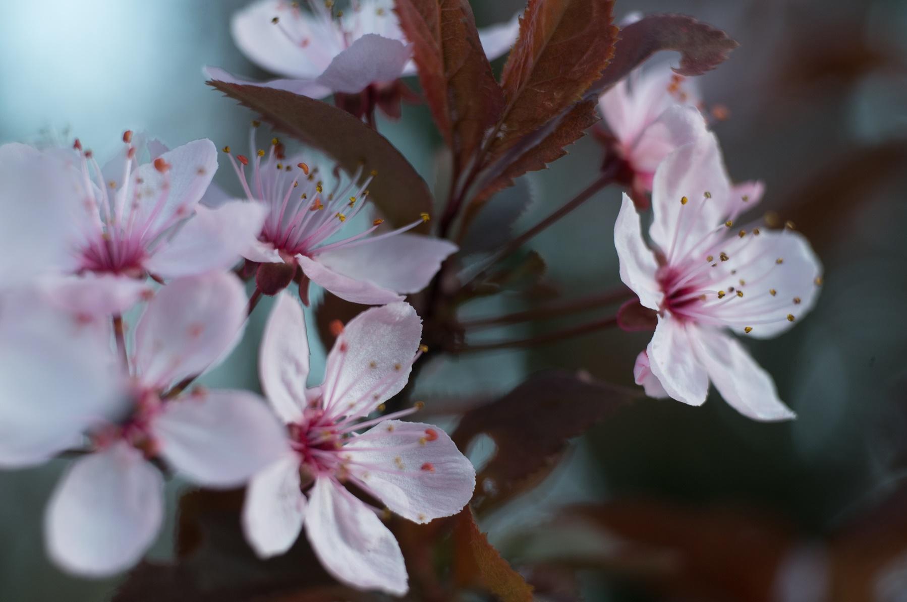 Delicato Colore Viola Pallido le fioriture