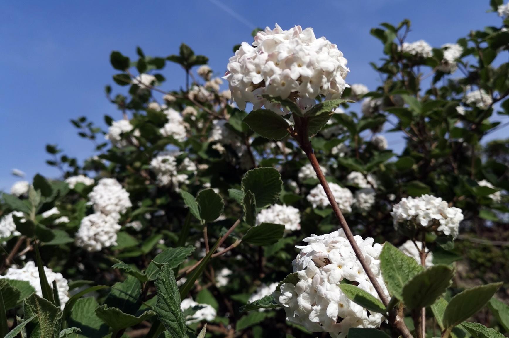 Piante Che Fioriscono Tutta Estate le fioriture